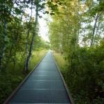 Natur-Park Steg